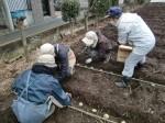 H270309ジャガイモ種植え (6)