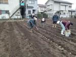 H270309ジャガイモ種植え (7)