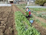 H270314野島農園種まき (16)
