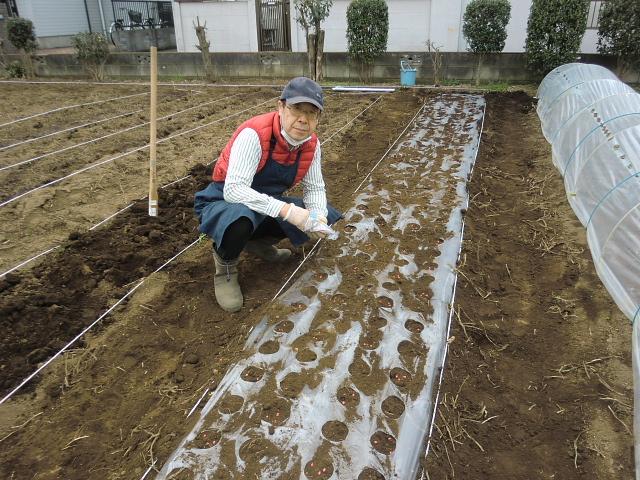 H270322トウモロコシ種まき (2)