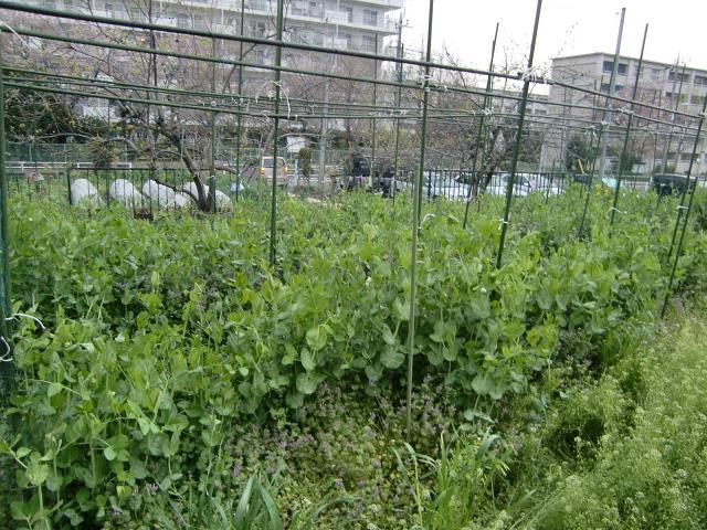 H270410野島農園の様子 (11)