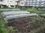 H270410野島農園の様子 (12)