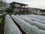 H270410野島農園の様子 (3)