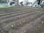 H270410野島農園の様子 (9)