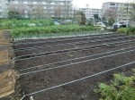 H270410野島農園の様子 (10)