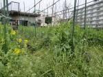 H270410野島農園の様子 (14)