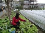H270410野島農園の様子 (4)