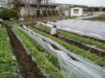 H270412野島農園 (29)