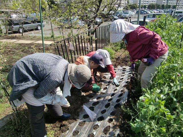 H270418野島農園 (10)