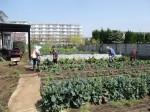 H270418野島農園 (11)