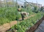 H270418野島農園 (12)