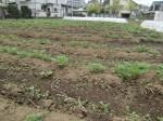 H270419野島農園 (16)