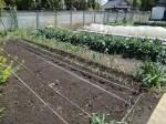 H270419野島農園 (6)