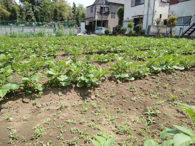 H270424野島農園 (11)
