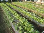 H270427野島農園 (15)