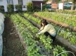 H270427野島農園 (3)