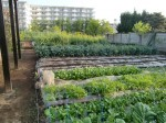 H270427野島農園 (12)