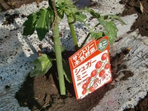 H270427野島農園 (22)