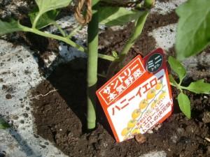 H270427野島農園 (23)