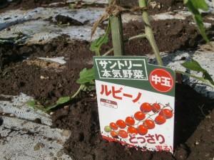 H270427野島農園 (24)