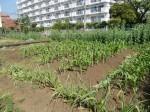 H270502野島農園 (19)