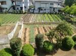 H270502野島農園 (20)