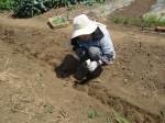 H270503野島農園 (21)