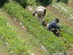 H270503野島農園 (29)