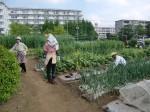 H270503野島農園 (4)