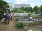 H270503野島農園 (10)