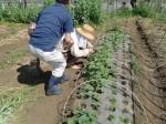 H270506野島農園 (12)