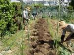 H270506野島農園 (9)