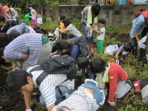 H240721親子農業体験ジャガイモ掘り (3)