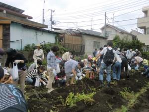 H240721親子農業体験ジャガイモ掘り (4)