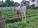 H270518ジャガイモ土かけ作業 (1)