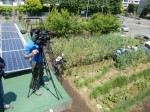 H270521いやし収穫体験・台湾公立TV取材 (4)