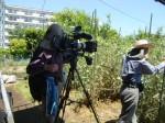H270521いやし収穫体験・台湾公立TV取材 (5)