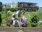 H270521いやし収穫体験・台湾公立TV取材 (11)