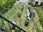 H270521いやし収穫体験・台湾公立TV取材 (8)