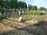 H270524農作業 (11)