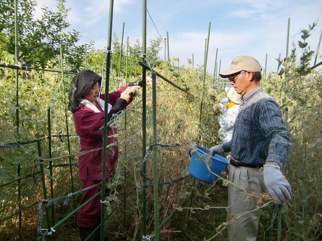 H270524農作業 (2)