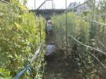 H270524農作業 (3)