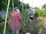 H270524農作業 (10)