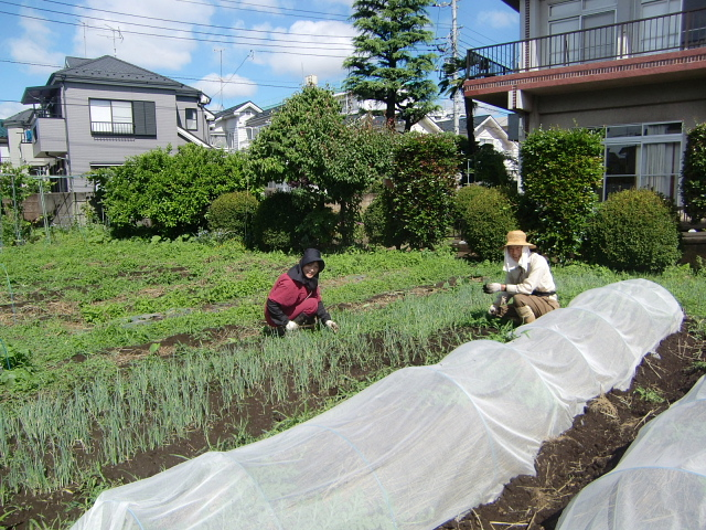 H270606ジャガイモ収穫 (1)