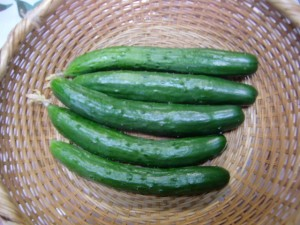 H270613枝豆収穫 (6)