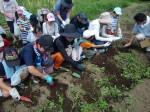 H270720親子農業体験ジャガイモ掘り (25)