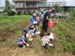 H270720親子農業体験ジャガイモ掘り (43)