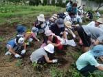 H270720親子農業体験ジャガイモ掘り (45)