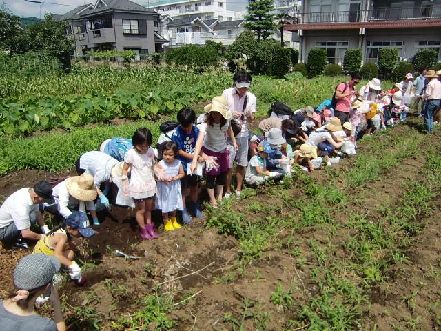 H270720親子農業体験ジャガイモ掘り (18)