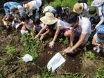 H270720親子農業体験ジャガイモ掘り (23)